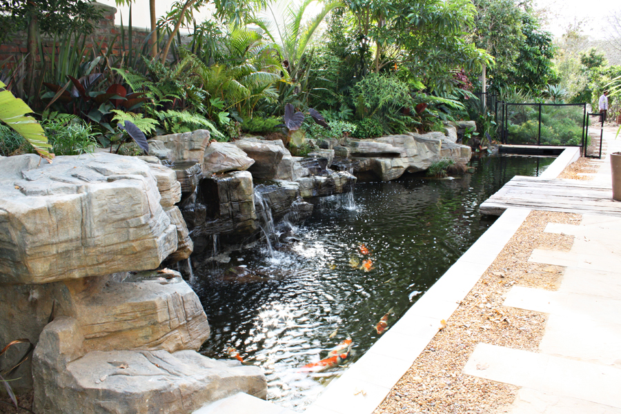 Rock features cape town water features cape town koi for Koi fish pond rocks