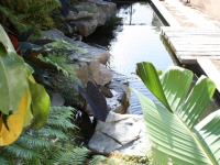 Koi pond, Water Feature Cape Town,