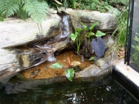 Natural Landscaped Environment with Waterfalls and koi pond